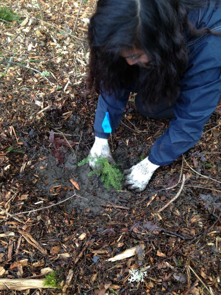 Tree Planting 12