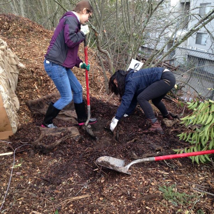 Tree Planting 9
