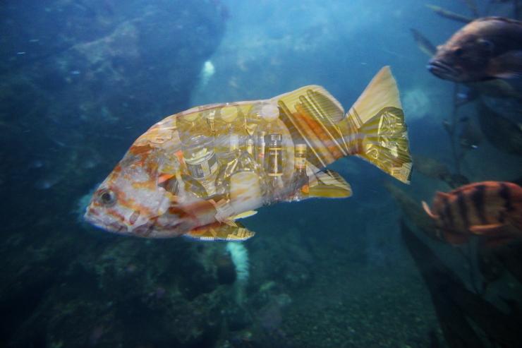 Garbage Fish - Lycia Tran