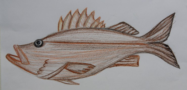 Bocaccio Rockfish.jpg
