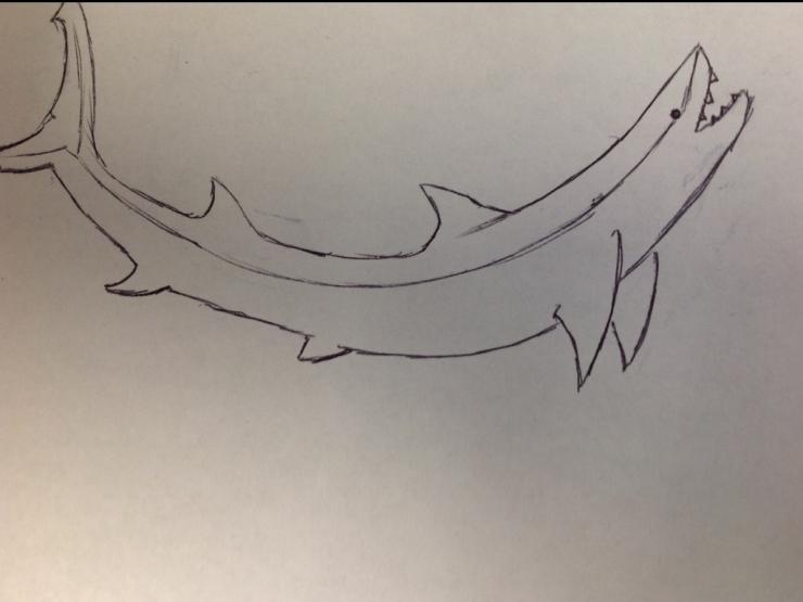 addie-shark-001